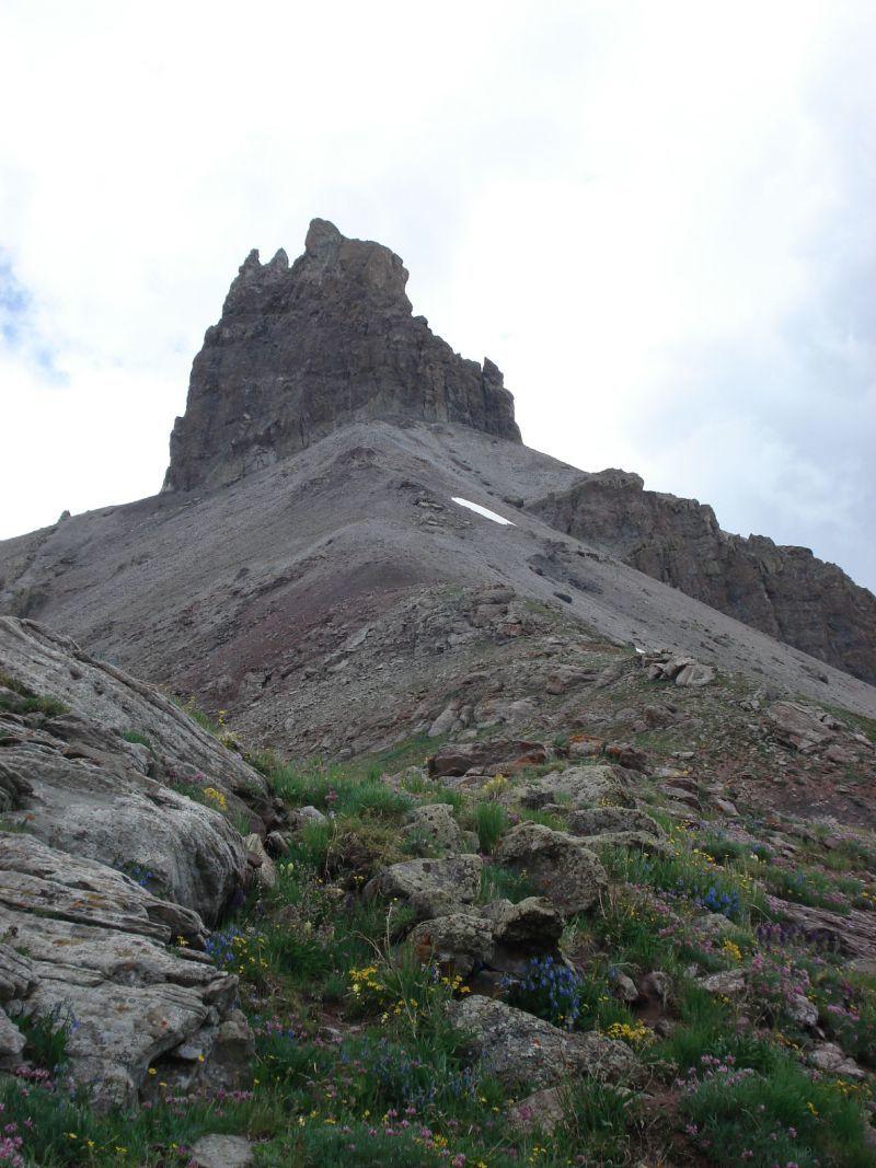Wildflowers on Lizard Head Peak Telluride CO