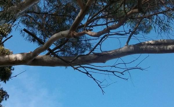 Dead tree limb