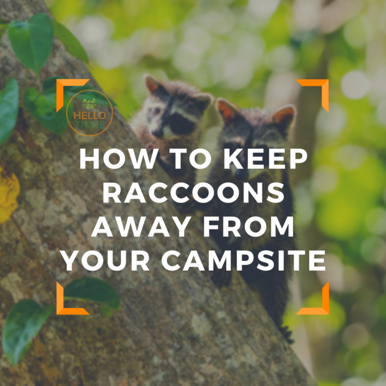 How to Keep Raccoons Away From Your Campsite (Easy Tips)